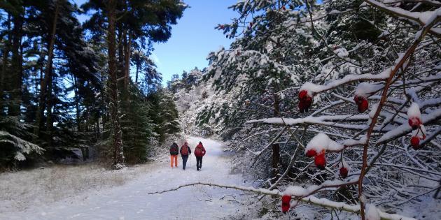 Randonneurs en hiver